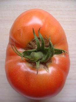 tomato15-1.JPG